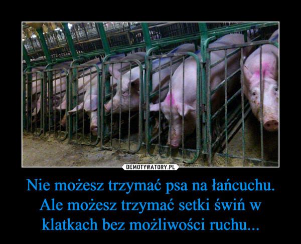 Nie możesz trzymać psa na łańcuchu. Ale możesz trzymać setki świń w klatkach bez możliwości ruchu... –