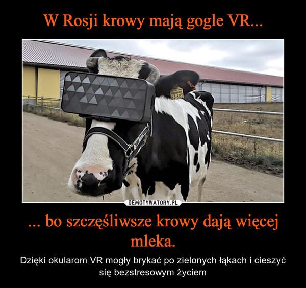 ... bo szczęśliwsze krowy dają więcej mleka. – Dzięki okularom VR mogły brykać po zielonych łąkach i cieszyć się bezstresowym życiem