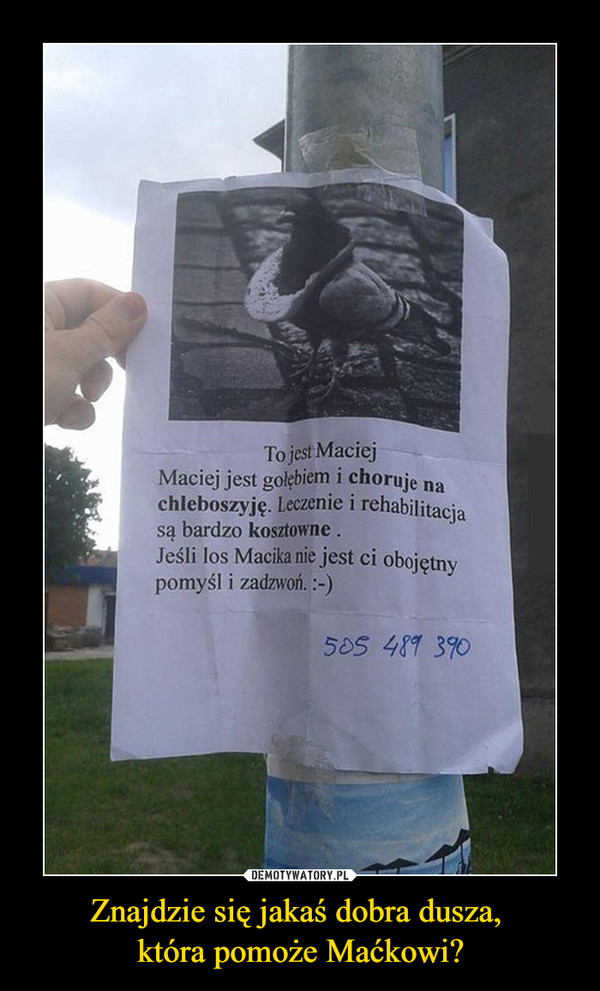 Znajdzie się jakaś dobra dusza, która pomoże Maćkowi? –  To jest MaciejMaciej jest golebiem i choruje nachleboszyję. Leczenie i rehabilitacjabardzo kosztowne.saJeśli los Macika nie jest ci obojętnypomyśl i zadzwoń. :-)