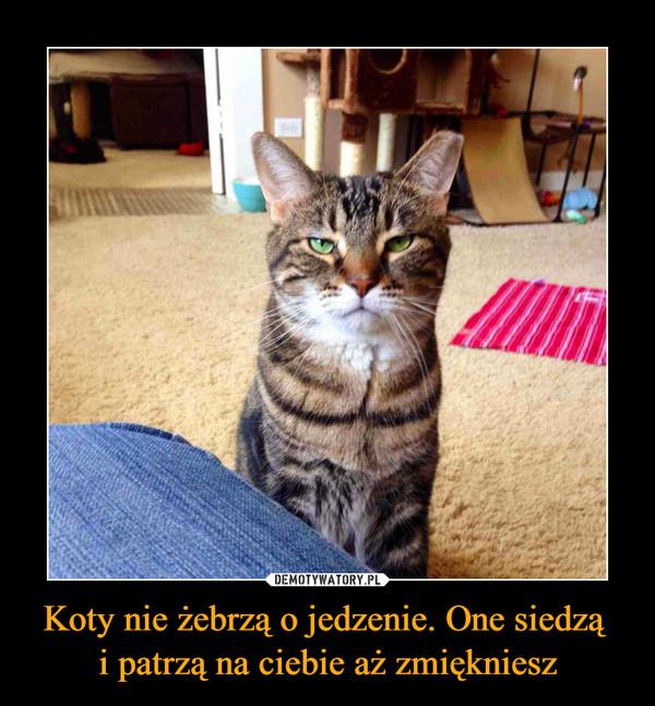 Koty nie żebrzą o jedzenie. One siedzą i patrzą na ciebie aż zmiękniesz –