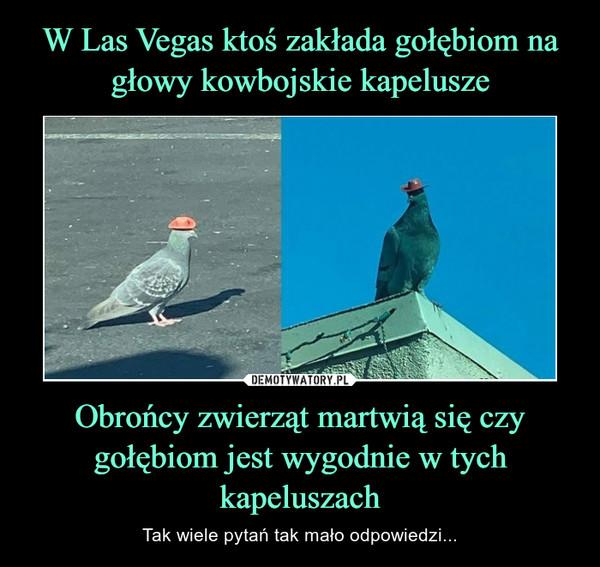 Obrońcy zwierząt martwią się czy gołębiom jest wygodnie w tych kapeluszach – Tak wiele pytań tak mało odpowiedzi...