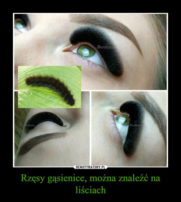 Rzęsy gąsienice, można znaleźć na liściach –