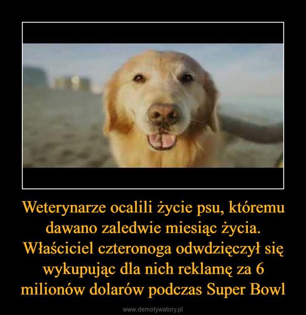Weterynarze ocalili życie psu, któremu dawano zaledwie miesiąc życia. Właściciel czteronoga odwdzięczył się wykupując dla nich reklamę za 6 milionów dolarów podczas Super Bowl –