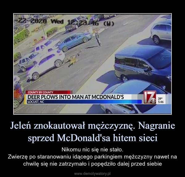 Jeleń znokautował mężczyznę. Nagranie sprzed McDonald'sa hitem sieci – Nikomu nic się nie stało.Zwierzę po staranowaniu idącego parkingiem mężczyzny nawet na chwilę się nie zatrzymało i popędziło dalej przed siebie