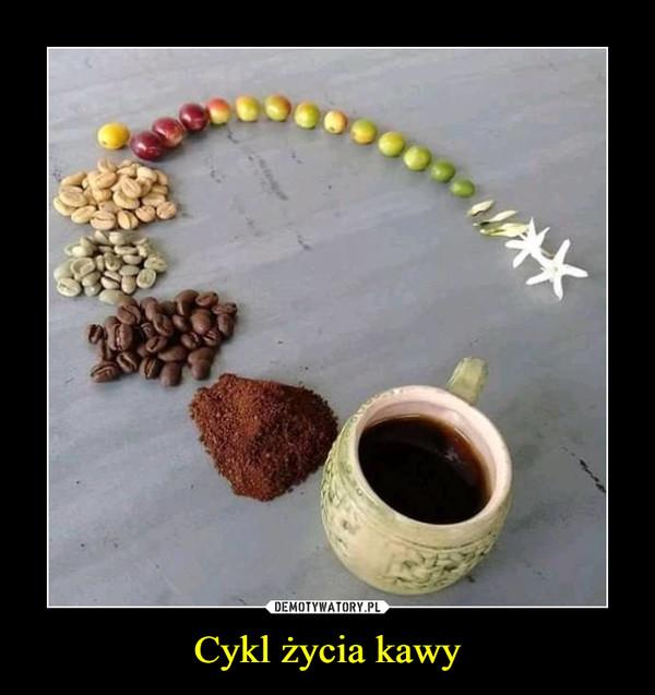 Cykl życia kawy –