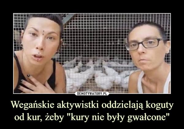 """Wegańskie aktywistki oddzielają koguty od kur, żeby """"kury nie były gwałcone"""" –"""