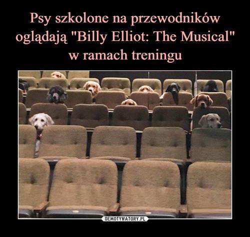 """Psy szkolone na przewodników oglądają """"Billy Elliot: The Musical"""" w ramach treningu"""