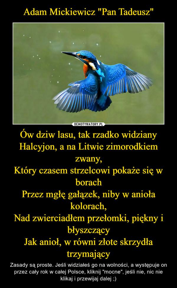 """Ów dziw lasu, tak rzadko widzianyHalcyjon, a na Litwie zimorodkiem zwany,Który czasem strzelcowi pokaże się w borachPrzez mgłę gałązek, niby w anioła kolorach,Nad zwierciadłem przełomki, piękny i błyszczącyJak anioł, w równi złote skrzydła trzymający – Zasady są proste. Jeśli widziałeś go na wolności, a występuje on przez cały rok w całej Polsce, kliknij """"mocne"""", jeśli nie, nic nie klikaj i przewijaj dalej ;)"""
