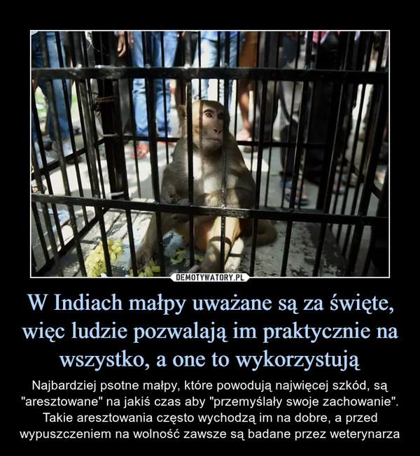 """W Indiach małpy uważane są za święte, więc ludzie pozwalają im praktycznie na wszystko, a one to wykorzystują – Najbardziej psotne małpy, które powodują najwięcej szkód, są """"aresztowane"""" na jakiś czas aby """"przemyślały swoje zachowanie"""". Takie aresztowania często wychodzą im na dobre, a przed wypuszczeniem na wolność zawsze są badane przez weterynarza"""