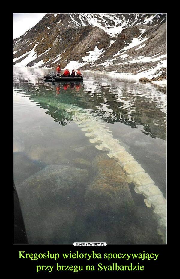 Kręgosłup wieloryba spoczywający przy brzegu na Svalbardzie –