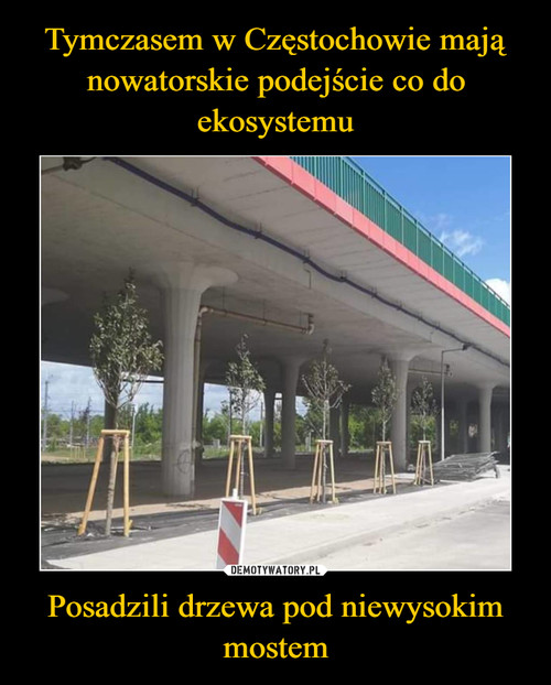 Tymczasem w Częstochowie mają nowatorskie podejście co do ekosystemu Posadzili drzewa pod niewysokim mostem