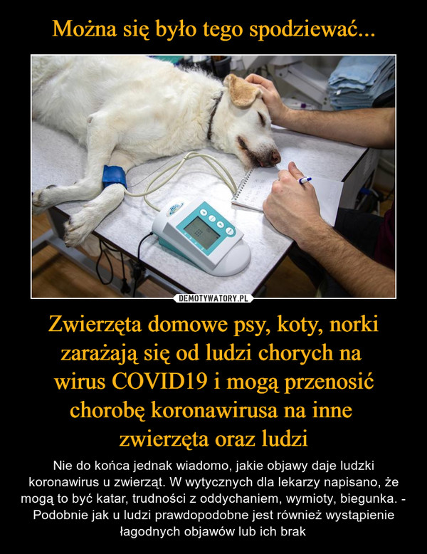 Zwierzęta domowe psy, koty, norki zarażają się od ludzi chorych na wirus COVID19 i mogą przenosić chorobę koronawirusa na inne zwierzęta oraz ludzi – Nie do końca jednak wiadomo, jakie objawy daje ludzki koronawirus u zwierząt. W wytycznych dla lekarzy napisano, że mogą to być katar, trudności z oddychaniem, wymioty, biegunka. - Podobnie jak u ludzi prawdopodobne jest również wystąpienie łagodnych objawów lub ich brak