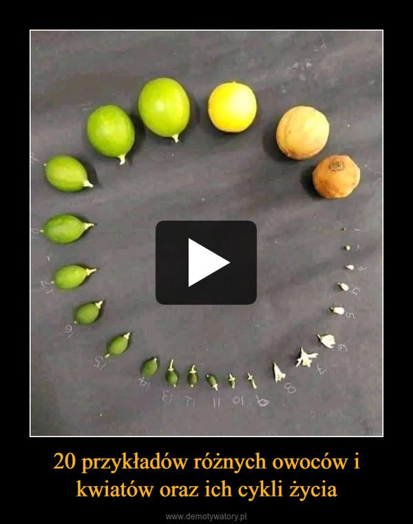 20 przykładów różnych owoców i kwiatów oraz ich cykli życia –