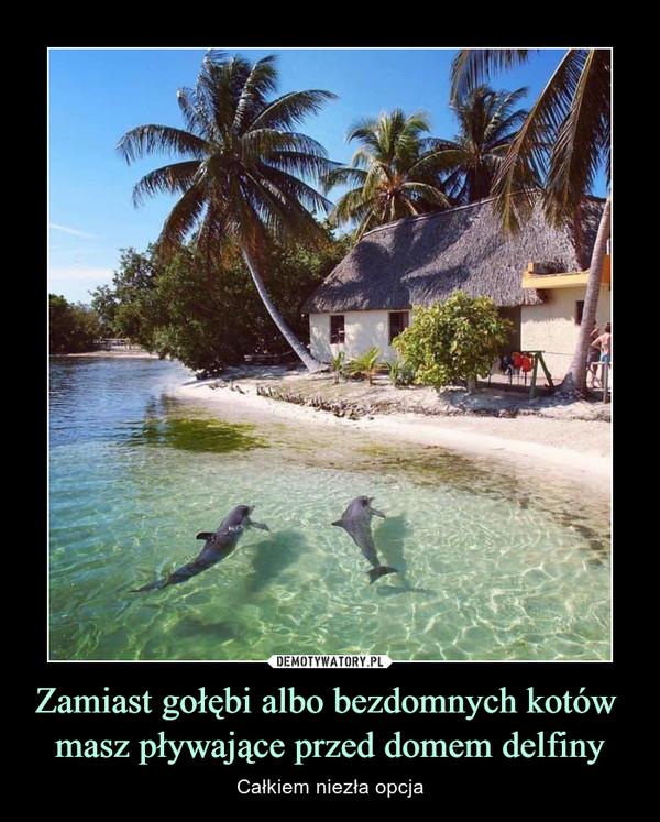 Zamiast gołębi albo bezdomnych kotów masz pływające przed domem delfiny – Całkiem niezła opcja