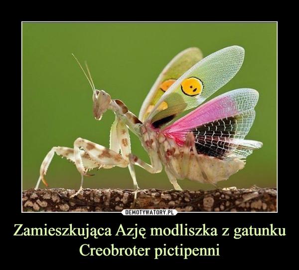 Zamieszkująca Azję modliszka z gatunku Creobroter pictipenni –