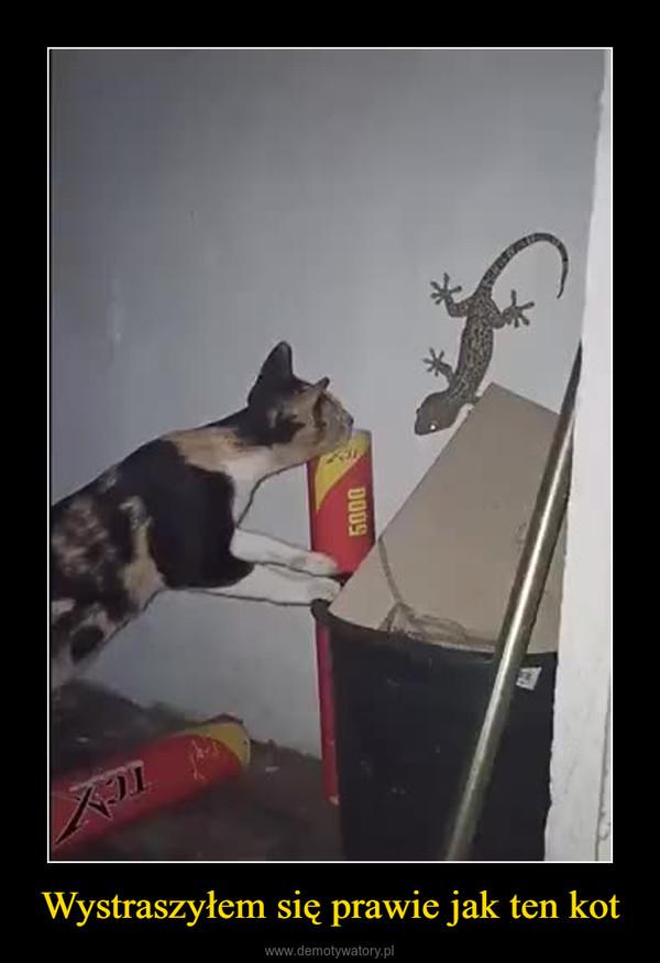 Wystraszyłem się prawie jak ten kot –