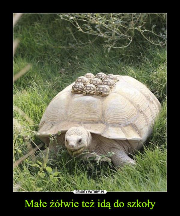 Małe żółwie też idą do szkoły –