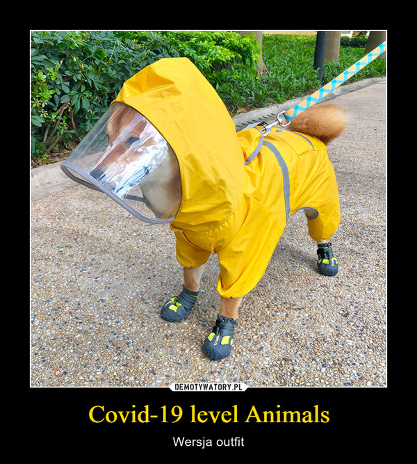 Covid-19 level Animals – Wersja outfit