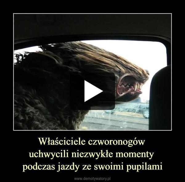 Właściciele czworonogów uchwycili niezwykłe momenty podczas jazdy ze swoimi pupilami –