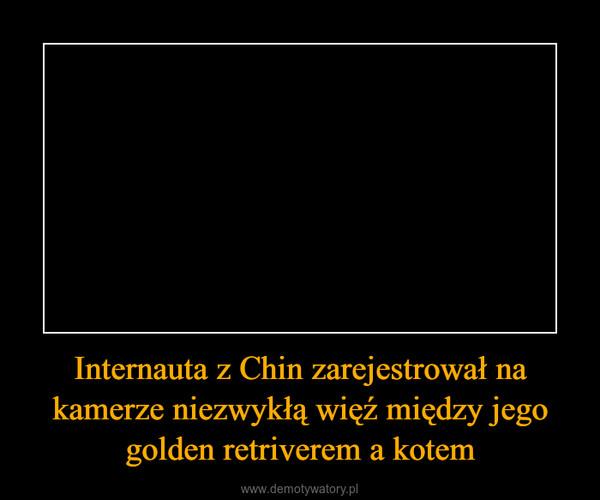 Internauta z Chin zarejestrował na kamerze niezwykłą więź między jego golden retriverem a kotem –