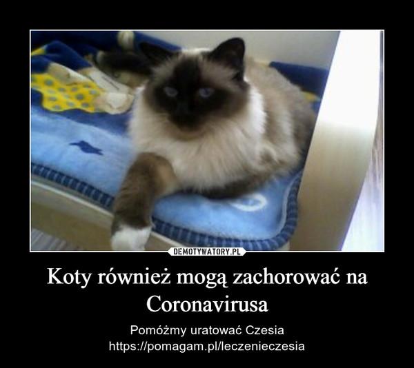 Koty również mogą zachorować na Coronavirusa – Pomóżmy uratować Czesiahttps://pomagam.pl/leczenieczesia