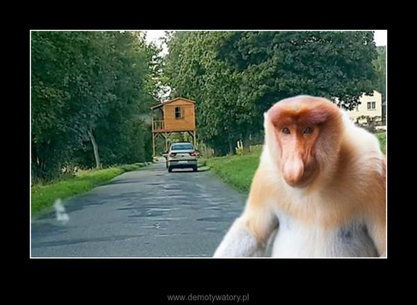 Jnausz i szwagier :) – Bezpieczeństwo na drodze przede wszystkim:)