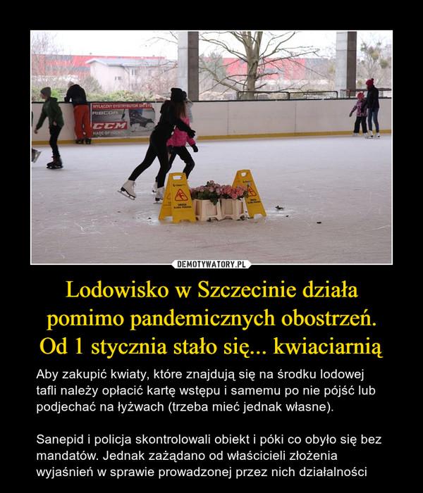 Lodowisko w Szczecinie działapomimo pandemicznych obostrzeń.Od 1 stycznia stało się... kwiaciarnią – Aby zakupić kwiaty, które znajdują się na środku lodowej tafli należy opłacić kartę wstępu i samemu po nie pójść lub podjechać na łyżwach (trzeba mieć jednak własne). Sanepid i policja skontrolowali obiekt i póki co obyło się bez mandatów. Jednak zażądano od właścicieli złożenia wyjaśnień w sprawie prowadzonej przez nich działalności