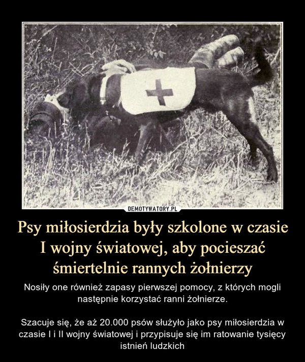 Psy miłosierdzia były szkolone w czasie I wojny światowej, aby pocieszać śmiertelnie rannych żołnierzy