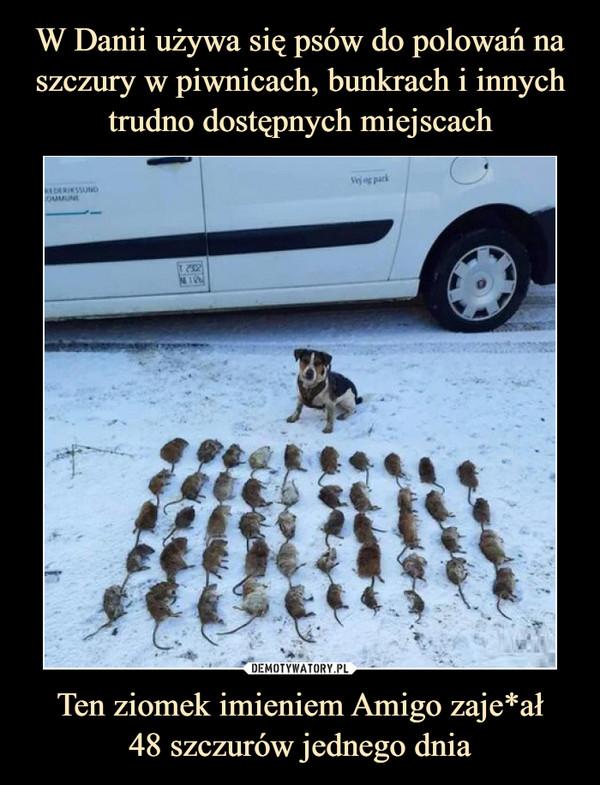 Ten ziomek imieniem Amigo zaje*ał48 szczurów jednego dnia –