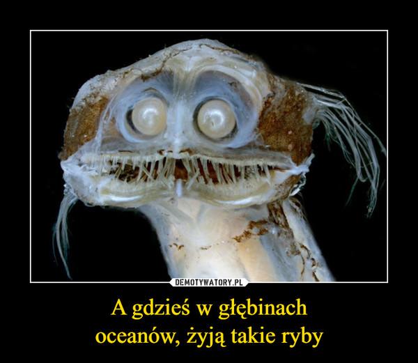 A gdzieś w głębinachoceanów, żyją takie ryby –