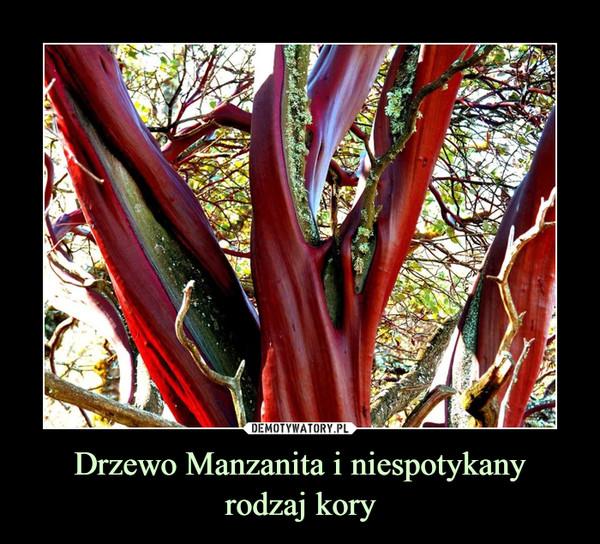 Drzewo Manzanita i niespotykanyrodzaj kory –