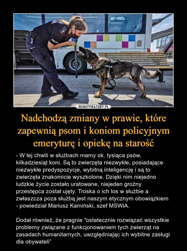 """Nadchodzą zmiany w prawie, które zapewnią psom i koniom policyjnym emeryturę i opiekę na starość – - W tej chwili w służbach mamy ok. tysiąca psów, kilkadziesiąt koni. Są to zwierzęta niezwykłe, posiadające niezwykłe predyspozycje, wybitną inteligencję i są to zwierzęta znakomicie wyszkolone. Dzięki nim niejedno ludzkie życie zostało uratowane, niejeden groźny przestępca został ujęty. Troska o ich los w służbie a zwłaszcza poza służbą jest naszym etycznym obowiązkiem - powiedział Mariusz Kamiński, szef MSWiA.Dodał również, że pragnie """"ostatecznie rozwiązać wszystkie problemy związane z funkcjonowaniem tych zwierząt na zasadach humanitarnych, uwzględniając ich wybitne zasługi dla obywateli"""""""