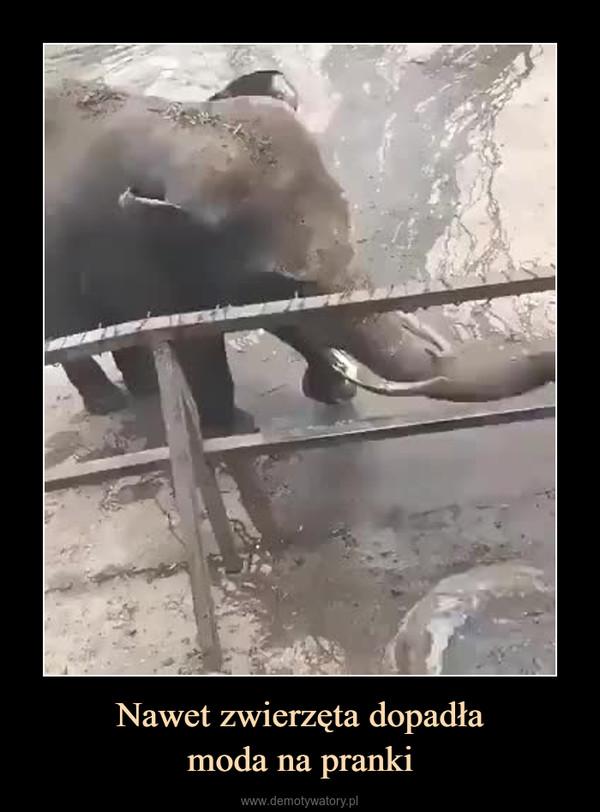 Nawet zwierzęta dopadłamoda na pranki –