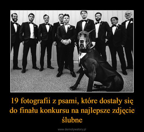 19 fotografii z psami, które dostały się do finału konkursu na najlepsze zdjęcie ślubne