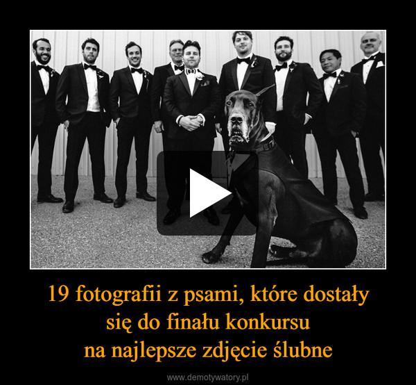 19 fotografii z psami, które dostałysię do finału konkursuna najlepsze zdjęcie ślubne –