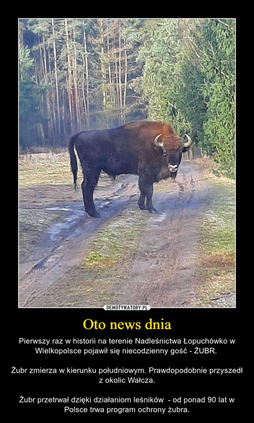 Oto news dnia