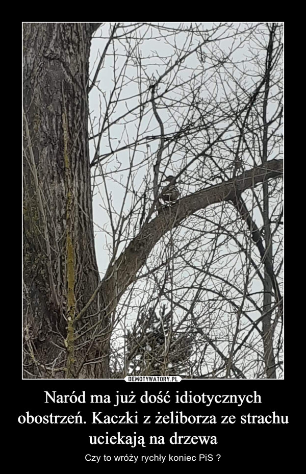 Naród ma już dość idiotycznych obostrzeń. Kaczki z żeliborza ze strachu uciekają na drzewa – Czy to wróży rychły koniec PiS ?