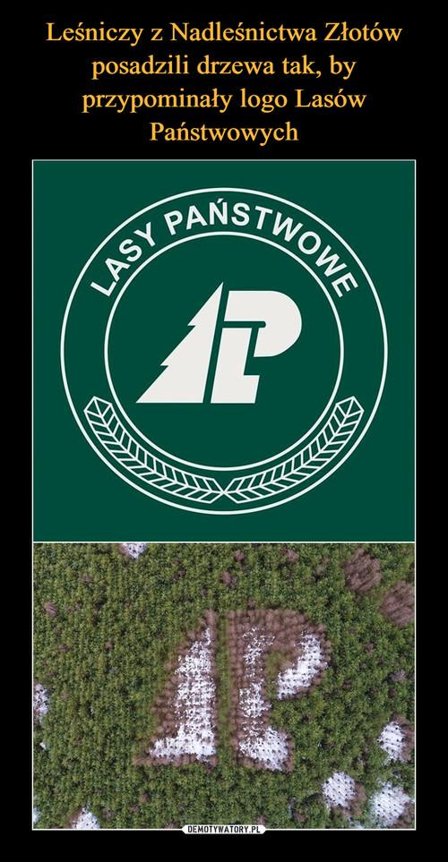Leśniczy z Nadleśnictwa Złotów posadzili drzewa tak, by przypominały logo Lasów Państwowych