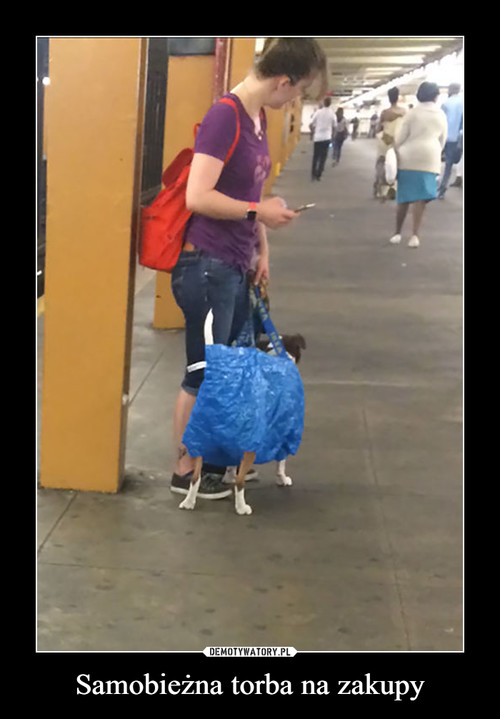 Samobieżna torba na zakupy