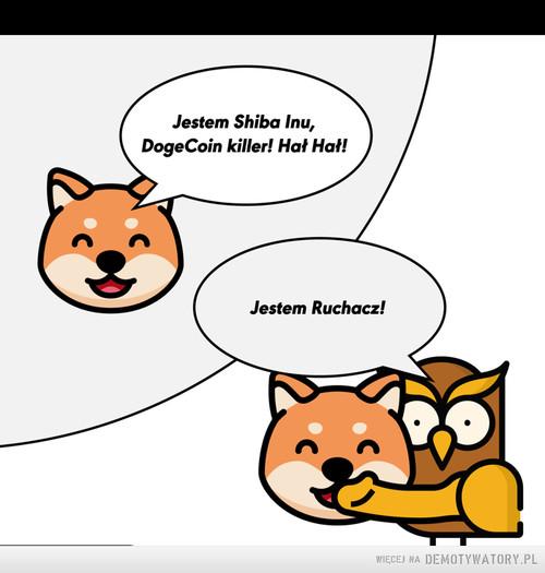 Shiba vs Ruchacz