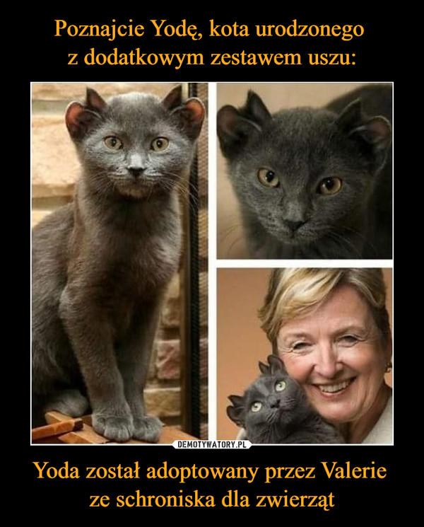 Yoda został adoptowany przez Valerie ze schroniska dla zwierząt –
