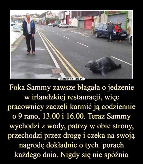Foka Sammy zawsze błagała o jedzenie w irlandzkiej restauracji, więc pracownicy zaczęli karmić ją codziennie o 9 rano, 13.00 i 16.00. Teraz Sammy wychodzi z wody, patrzy w obie strony, przechodzi przez drogę i czeka na swoją nagrodę dokładnie o tych  porach każdego dnia. Nigdy się nie spóźnia