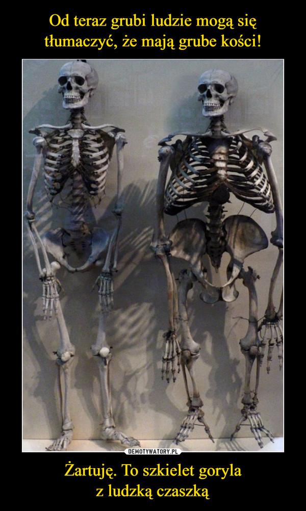 Żartuję. To szkielet gorylaz ludzką czaszką –