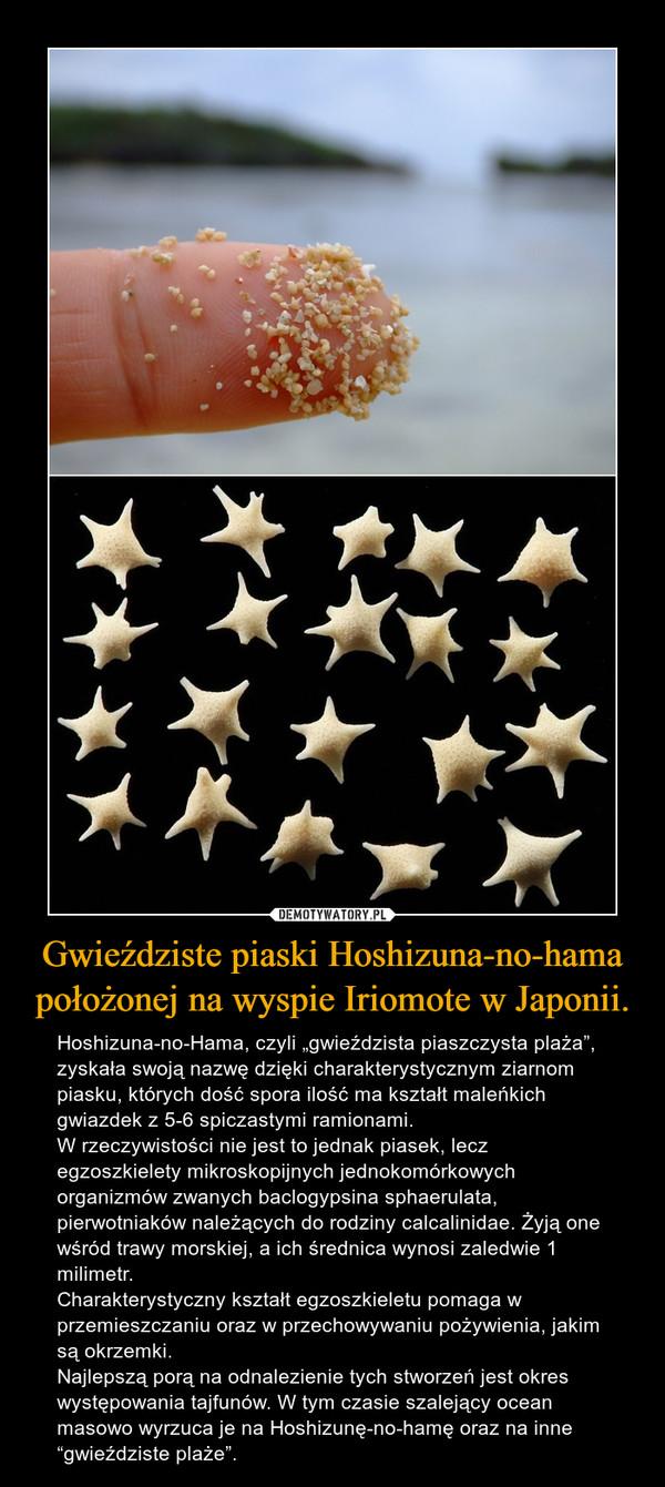 """Gwieździste piaski Hoshizuna-no-hama położonej na wyspie Iriomote w Japonii. – Hoshizuna-no-Hama, czyli """"gwieździsta piaszczysta plaża"""", zyskała swoją nazwę dzięki charakterystycznym ziarnom piasku, których dość spora ilość ma kształt maleńkich gwiazdek z 5-6 spiczastymi ramionami. W rzeczywistości nie jest to jednak piasek, lecz egzoszkielety mikroskopijnych jednokomórkowych organizmów zwanych baclogypsina sphaerulata, pierwotniaków należących do rodziny calcalinidae. Żyją one wśród trawy morskiej, a ich średnica wynosi zaledwie 1 milimetr. Charakterystyczny kształt egzoszkieletu pomaga w przemieszczaniu oraz w przechowywaniu pożywienia, jakim są okrzemki. Najlepszą porą na odnalezienie tych stworzeń jest okres występowania tajfunów. W tym czasie szalejący ocean masowo wyrzuca je na Hoshizunę-no-hamę oraz na inne """"gwieździste plaże""""."""