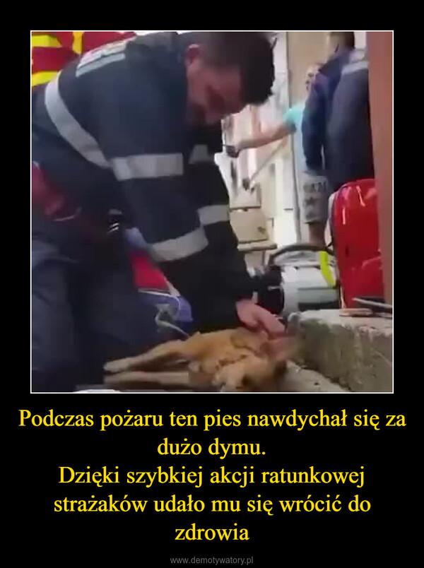 Podczas pożaru ten pies nawdychał się za dużo dymu.Dzięki szybkiej akcji ratunkowej strażaków udało mu się wrócić do zdrowia –