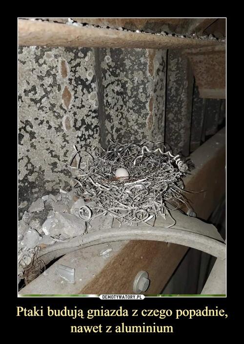Ptaki budują gniazda z czego popadnie, nawet z aluminium