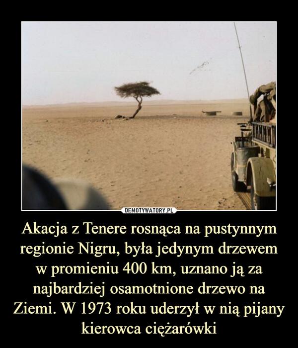 Akacja z Tenere rosnąca na pustynnym regionie Nigru, była jedynym drzewem w promieniu 400 km, uznano ją za najbardziej osamotnione drzewo na Ziemi. W 1973 roku uderzył w nią pijany kierowca ciężarówki –