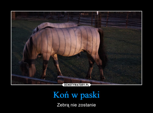 Koń w paski