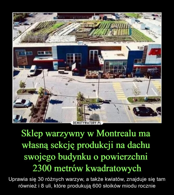 Sklep warzywny w Montrealu ma własną sekcję produkcji na dachu swojego budynku o powierzchni 2300 metrów kwadratowych – Uprawia się 30 różnych warzyw, a także kwiatów, znajduje się tam również i 8 uli, które produkują 600 słoików miodu rocznie
