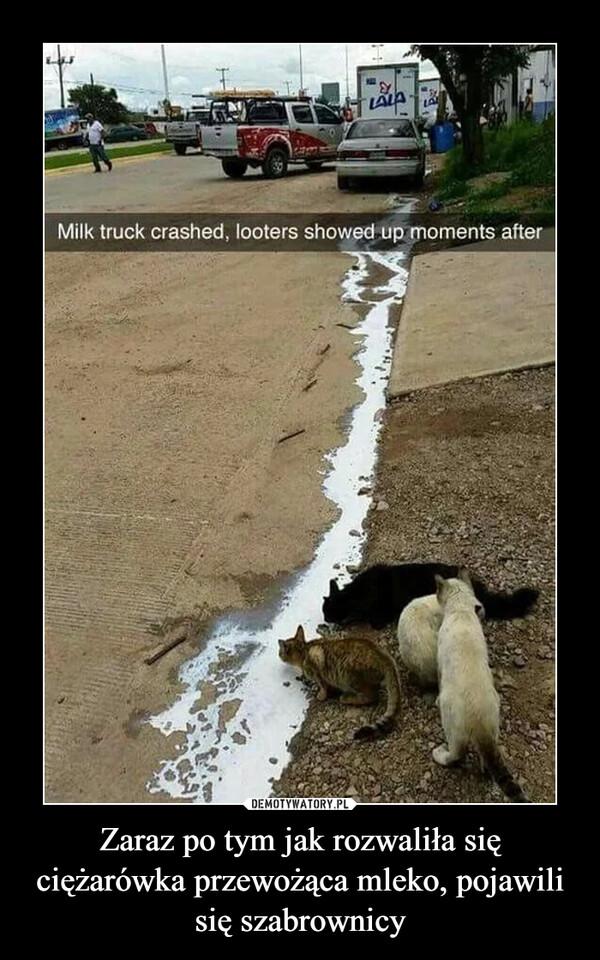 Zaraz po tym jak rozwaliła się ciężarówka przewożąca mleko, pojawili się szabrownicy –